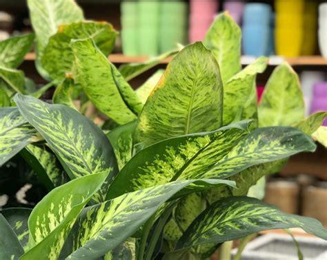 tipi di piante da appartamento piante da appartamento consigli e idee per l autunno