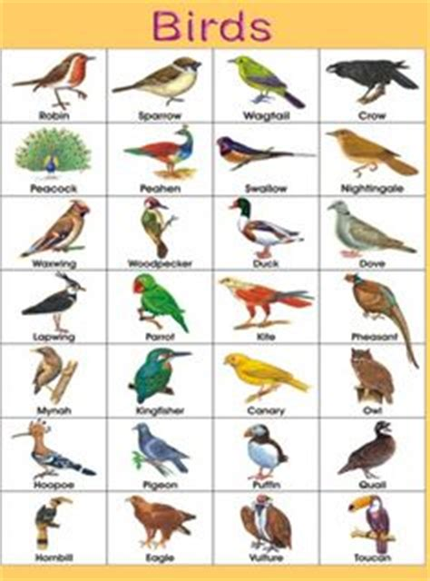 birds in hindi ह न द म पक ष च ड य hindi taal