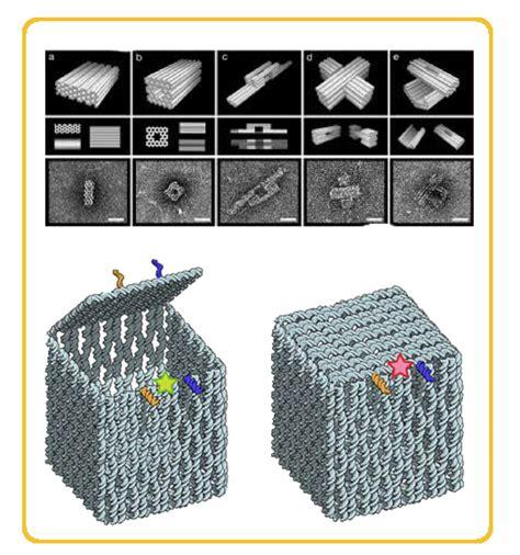 Dna Origami Applications - team tiny trap