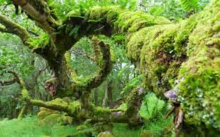 Irish Cottage Gardens - green jungle hd wallpaper wallpaper list
