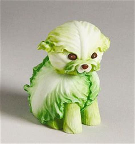 is cabbage for dogs cabbage