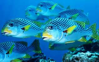 Ocean life wallpapers marine life on the seabed like fish plants