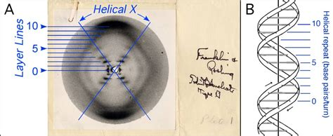 x ray diffraction pattern of dna 4 other fields development of x ray crystallography