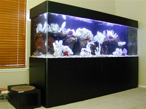 aquarium design network related keywords suggestions for home aquarium tank sizes