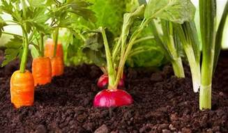how to grow tasty homegrown veggies