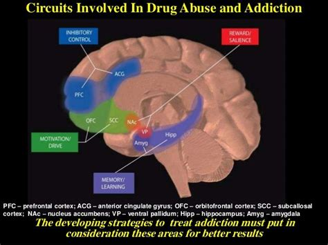 Substance Abuse Detox Massachusetts by 130 Best Images About Neuroanatomy On