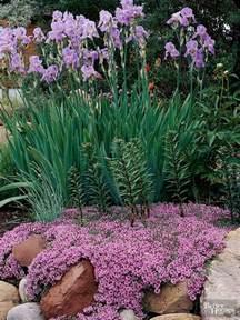 best plants for a rock garden