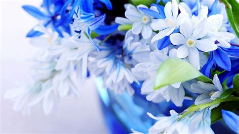 beautiful flowers flowers for flower beautiful flowers desktop