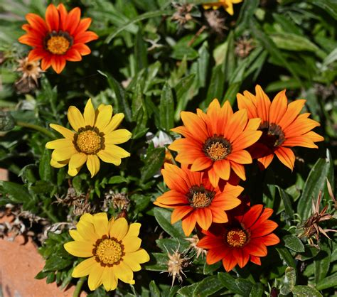 top 28 late summer flowers the gleewoman s notes oh the flowers of late summer flowers of