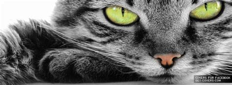 Cat Cover by Cats Covers 2014 Animals Timeline