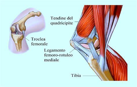 infiammazione ginocchio interno tendine rotuleo la rottura e un dolore insopportabile