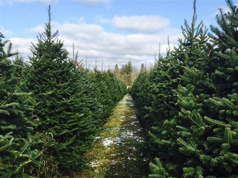 beaver county christmas tree farms your beaver county