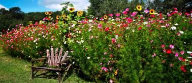 Perennial Flower Garden Design Ideas - wildflower seed planting instructions