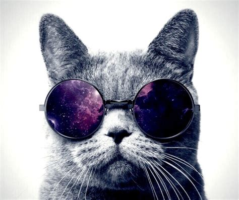 wallpaper cat with sunglasses galaxy cat with glasses bing images