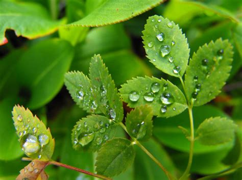 small raincoat small leaves after by mariannemason on deviantart