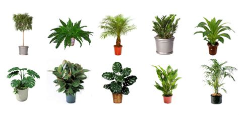 Best Indoor Plants For Oxygen by The Best 10 Indoor Plants That Purify The Air