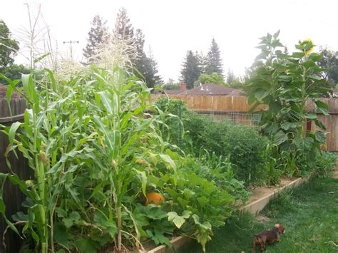17 Best Images About A Garden Would Be Nice On Pinterest Vegetable Garden Forum