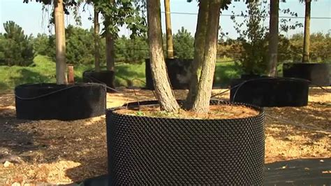 Planter Pots by Big Trees In Air Pot Containers Youtube