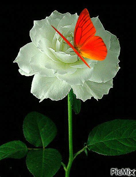 imagenes en movimiento rosas imagenes de flores con mariposas con movimiento