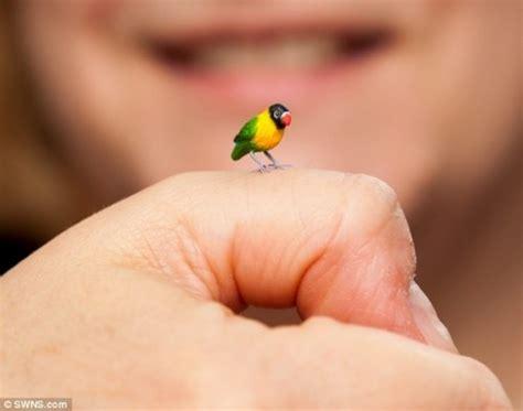 tiny tainy micro animals from sadie cbell oddities