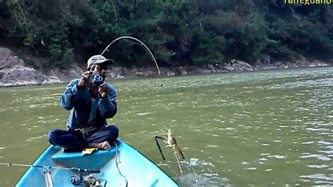 Pancing Udang Galah mancing udang galah di lubuk petai sungai kuala gris