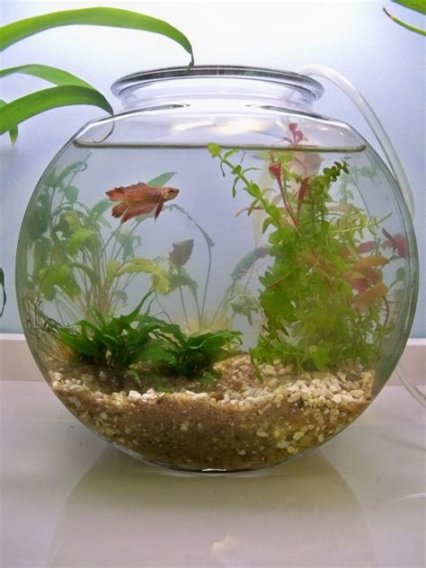 Small Heater For Betta Fish Bowl Category Katharine S Crawling Creatures
