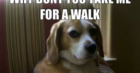 Serious Dog Meme - cosmodoggyland today s funny treat