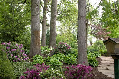 Landscape Ideas Shaded Areas Elegance Rhododendron Azalea Smalls