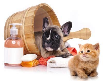 grooming lakewood pet grooming lakewood cat grooming services lakewood groomers lakewood