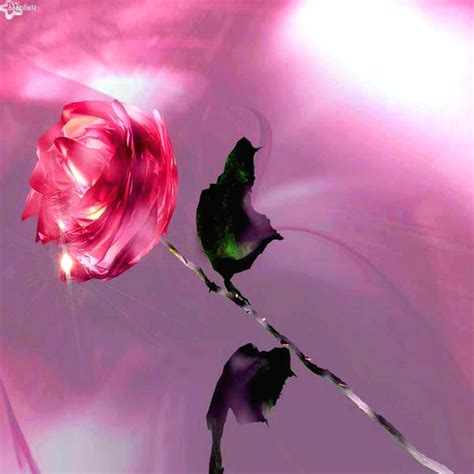 imagenes de rosas rojas descargar gratis imagenes hermosas fotos lindas y frases bellas imagenes