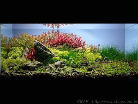 Freshwater Aquascape Ideas by 2023 Best Aquascaping Images On Aquascaping Aquariums And Freshwater Aquarium