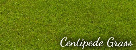 grass selections brazos valley hydroseeding