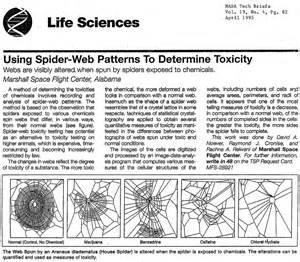 Garden Spider On Drugs Weekend Diversion Spider Webs On Drugs Starts With A
