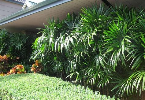 easy apartment plants 3 resistant plants easy of care even and of oblivious