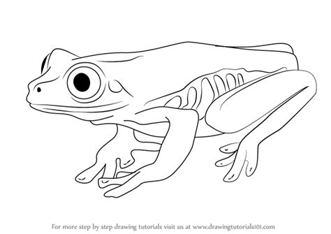 Drawing A Tree Frog Step By Step by Learn How To Draw A Tree Frog Hibians Step By Step