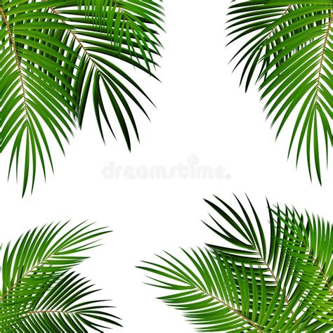 wallpaper daun palma palm leaf vector background illustration stock vector