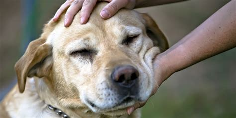 petting a dogs prefer petting way more than you thought