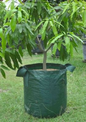 Harga Planter Bag Jogja promo o8ii 263i 3o4 jual planter bag eceran planter bag