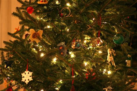 boys scouts will take away your old christmas tree