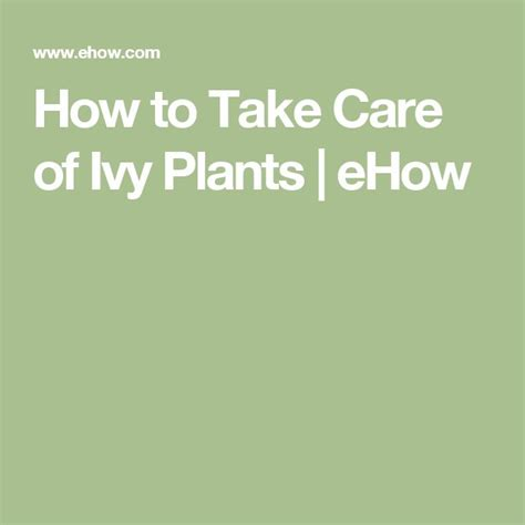 top 25 ideas about ivy plants on pinterest hedera helix house plants and indoor plants low light