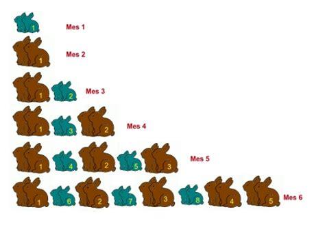 imagen para colrear del ciclo de vida conejo y despu 233 s del ocho viene el 13 mateaventuras mati y