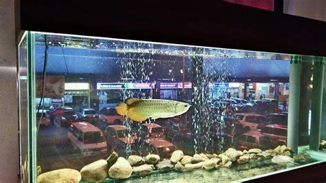 Meja Aquarium meja rasa kk arowana fish unique intro by gafc
