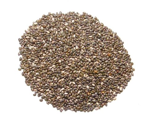 with seed chia seeds denver spice