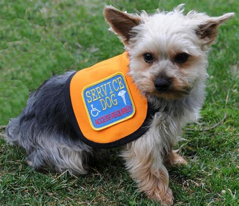 service vest for dogs small service vest official vest for small dogs