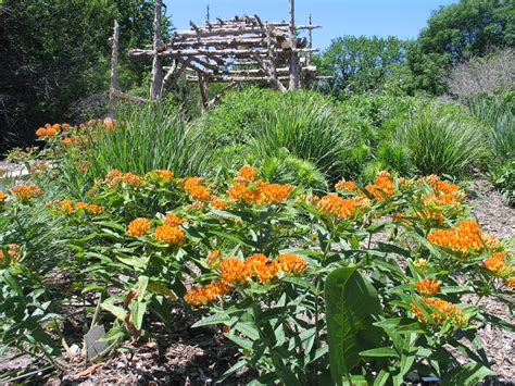 backyard planting how to design a native plant garden dyck arboretum