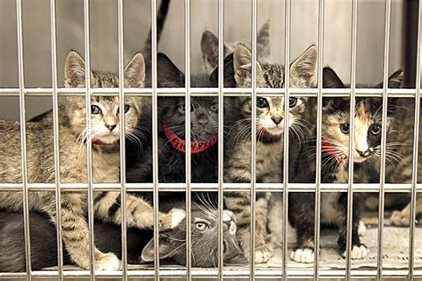 8 Ways To Help Out Your Local Animal Shelter by 7 Ways To Help Your Local Animal Shelter