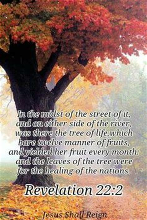 bible verse fruit of the tree when you delight in the word and meditate on it day and