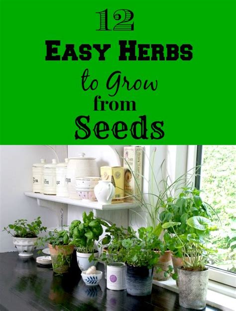 easy herbs to grow inside 12 easy herbs to grow from seeds 214 rter