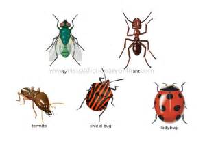 animal kingdom insects and arachnids examples of insects 4 image visual dictionary online