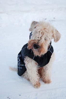 se filmer dogman vinteroufit bilder filmer hundar ifokus